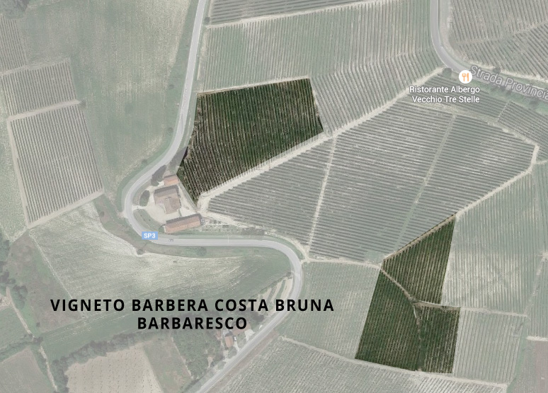 barbera costa bruna